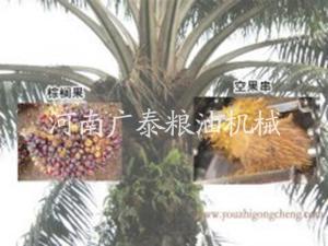 棕榈油加工万博体育哪里可以下载